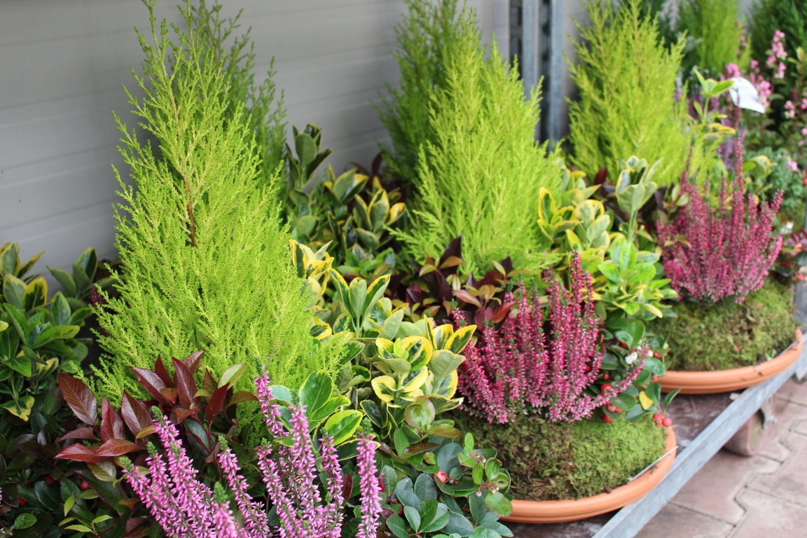 Fiori Perenni Da Balcone piante da esterno - alpaflor belluno