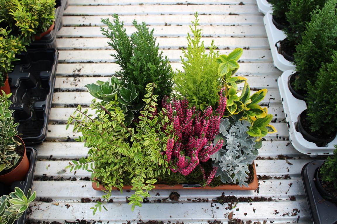 Composizione Vasi Da Balcone piante da esterno - alpaflor belluno
