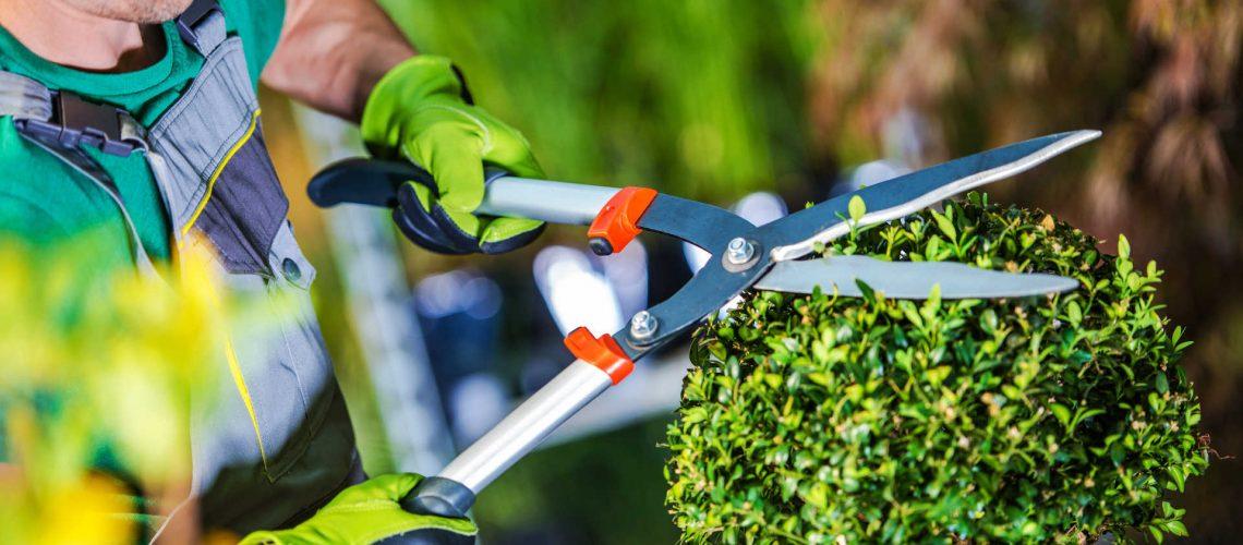 Giardinaggio, cosa non può mancare nel capanno degli attrezzi